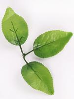 Лист яблони разм. 15 см